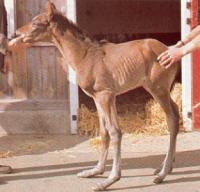 Enfermedades oseas del caballo
