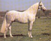 Pony-gales